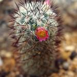 Kaktusy v botanické zahradě