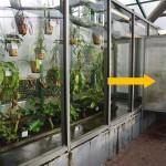 Klimatron v botanické zahradě