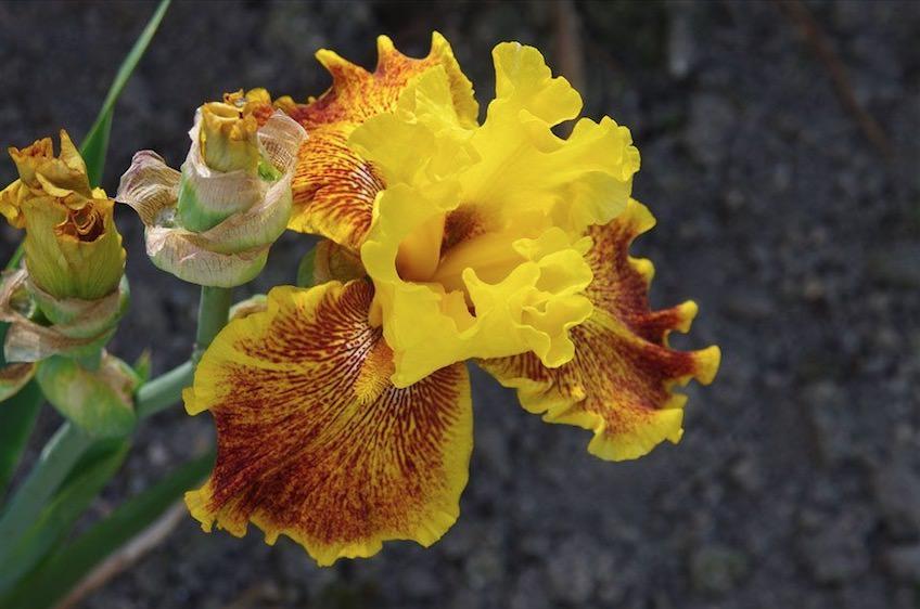 botanicka3