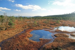 Rašeliniště Na Čihadle, foto: Emil Drápela