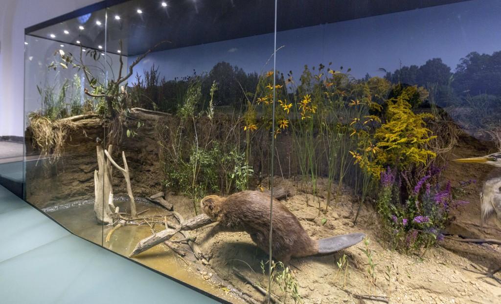 Severočeské muzeum - Doteky severu
